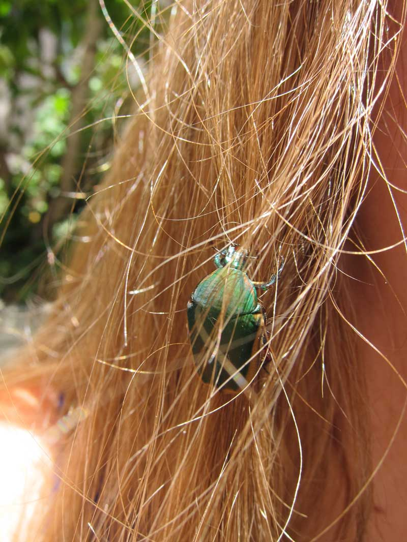 What Does It Mean When a Beetle Lands in Your Hair? • Soul